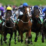 ブックメーカー競馬を使用して賭けを機能させる
